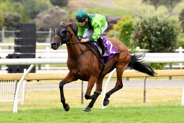 Zabeel Shoots for 4th Melbourne Cup Winner