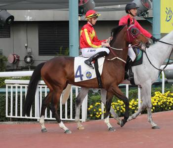 Above Continues his Winning Ways in HK