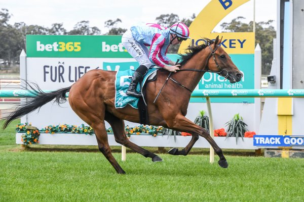 Stud graduate makes flying start at Bendigo