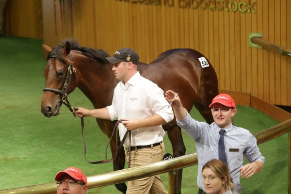 Harvey lands prize Savabeel colt